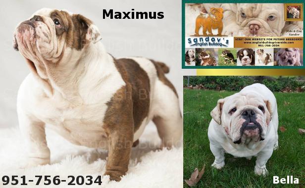 Maximus & Bella