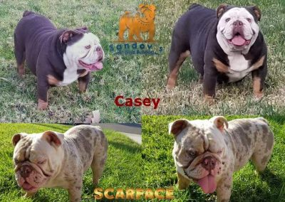 Casey-Scarface