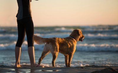 How to Avoid Problems When Travelling with Your Dog