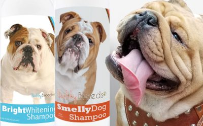 Dog Shampoo for Bulldogs